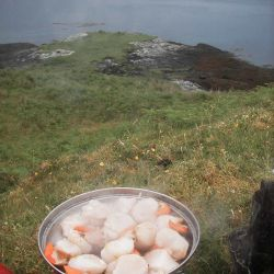 cooking scallops outdoors at wild camp